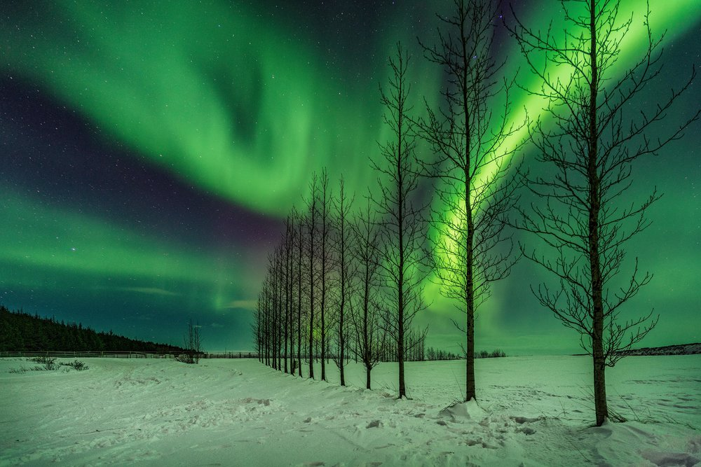 Iceland. snow. travel. adventure. photography. trip. epic landscape. snow. cold. freezing. sunrise. nothern lights. trees under lights.jpg