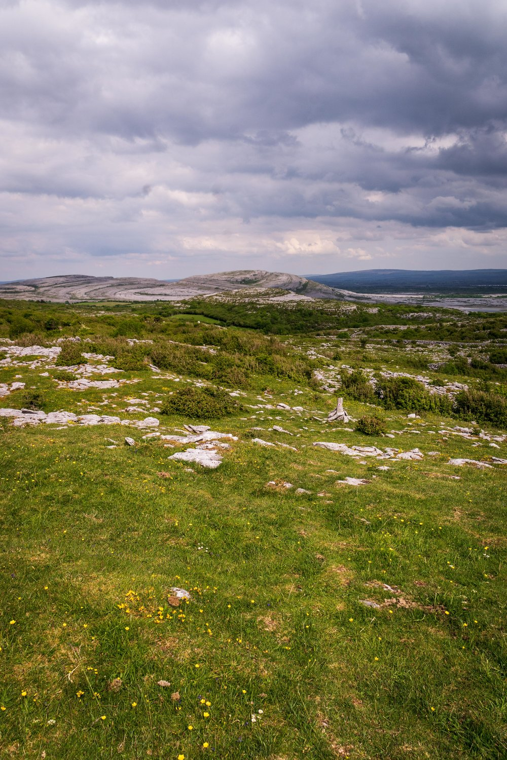 #Spring is the best time to see #wildflowers bloom in the Burren #Ireland   all the ways you wander   #nature #travel