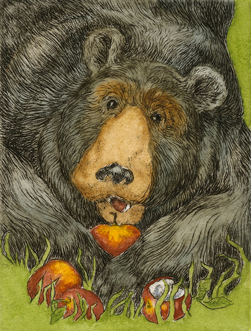 """Bear Neccessities""  – I spent an afternoon with this neighborhood bruin one fine summer day. He took quite a fancy to our old apple tree by the greenhouse. He was the picture of health; tubby with a glistening, black coat. We let him eat his full. I found a couple organic apples from the co-op that were past their prime… in the not-so-crisper drawer of the fridge. He ate all the tree apples but snubbed the others. Locavore."