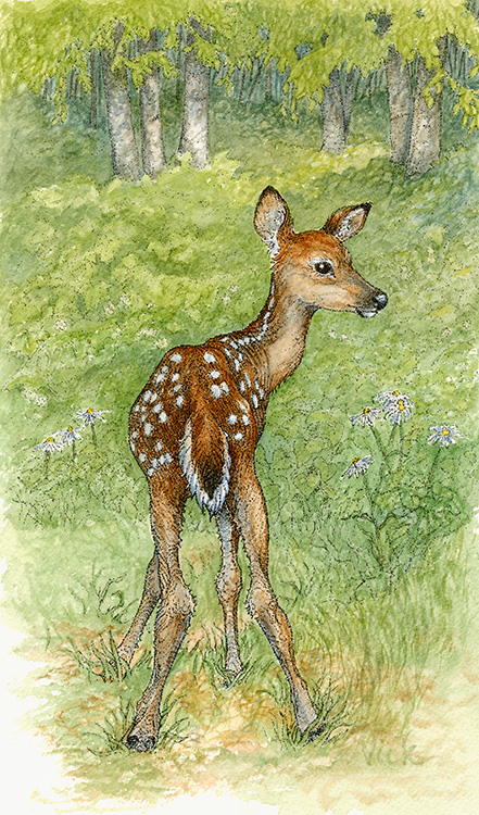 """Newbie""  – I painted this from a photo my friend took of her newest neighbor. For years one particular doe has brought her newborn fawns to the sanctuary that is CJ's yard, to make an introduction of sorts. After a doe gives birth, she must then find a safe place to leave little Newbie so that she can go off and feed to replenish her strength. Many a fawn has taken her first tenuous steps under CJ's watchful eye. Mama's know we need and can trust each other."