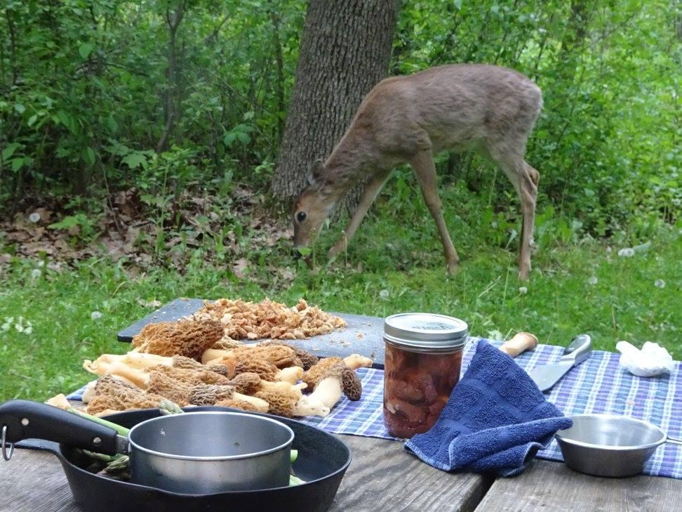 Morels and Deer at camp.jpg