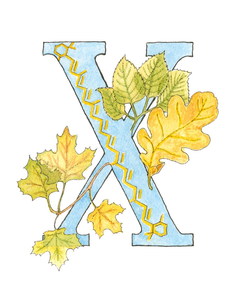 X - Xanthophyll.jpg