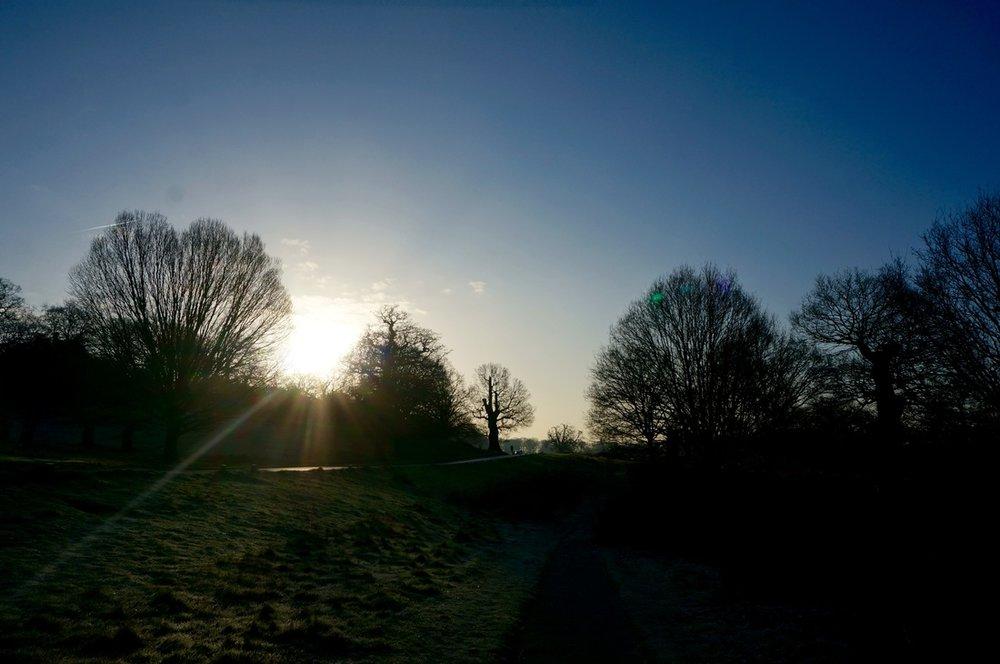 02 Richmond Park.jpg