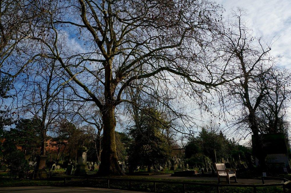 08 Brompton Cemetery.jpg