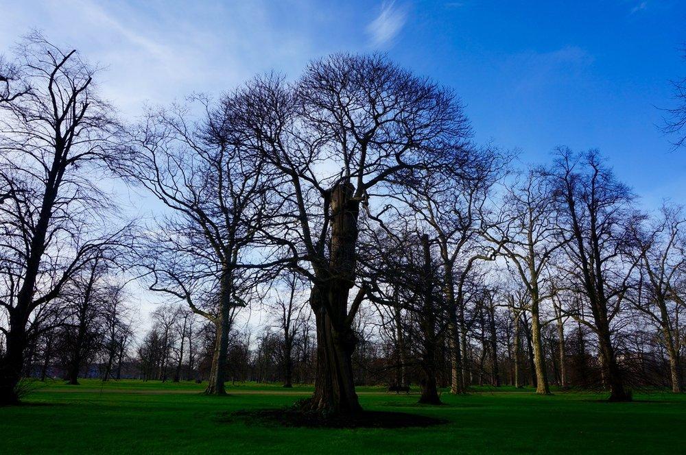 04 Kensington Gardens.jpg