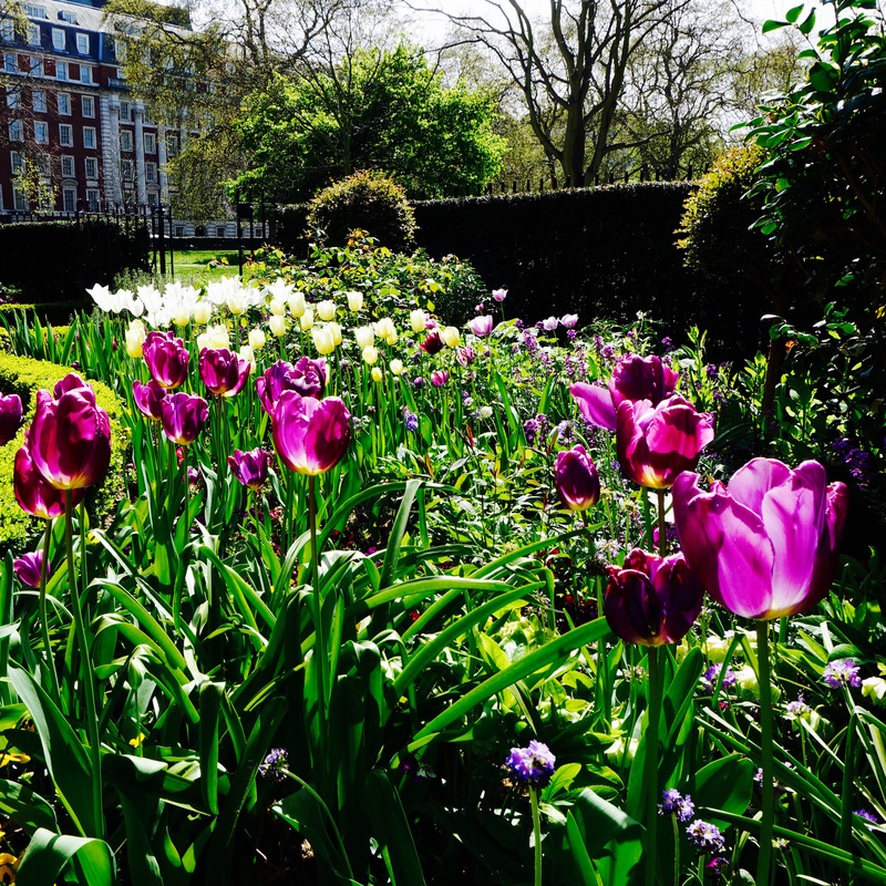 01 Grosvenor Square Gardens.jpg
