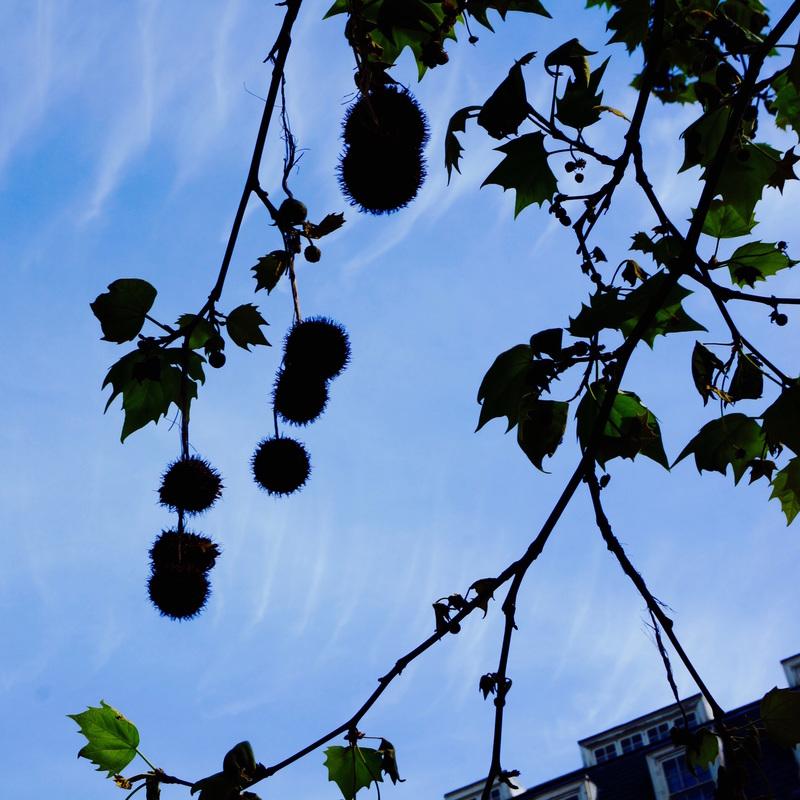 03 Grosvenor Square Gardens.jpg