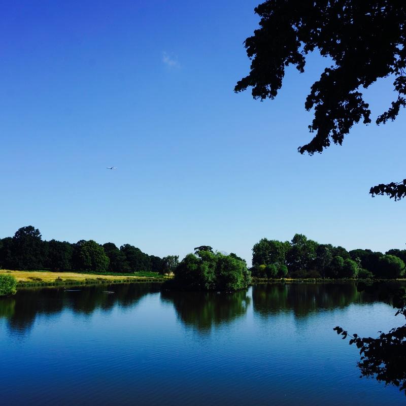 07 Richmond Park.jpg
