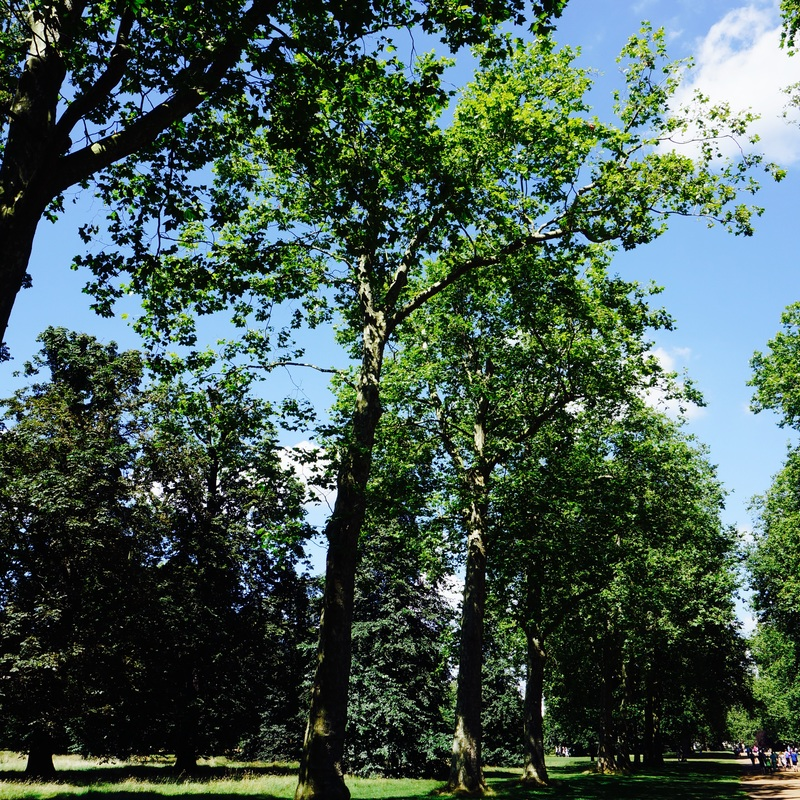 03 Kensington Gardens.jpg