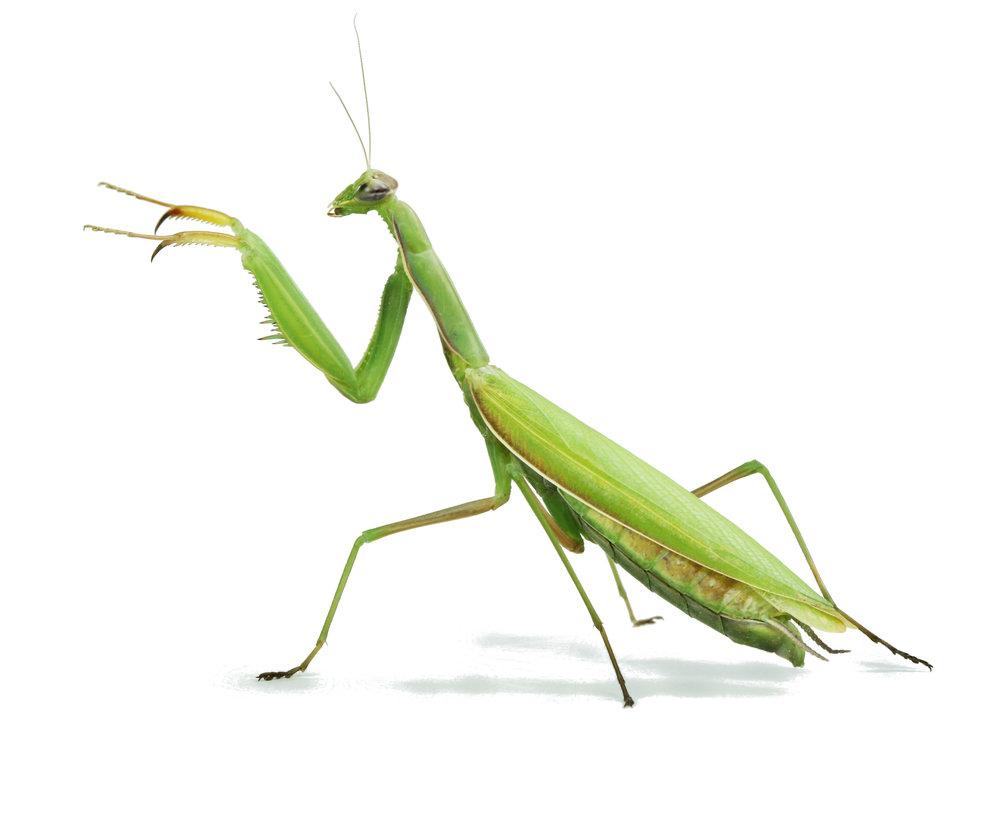 Le monde des insectes - animations sur les insectes