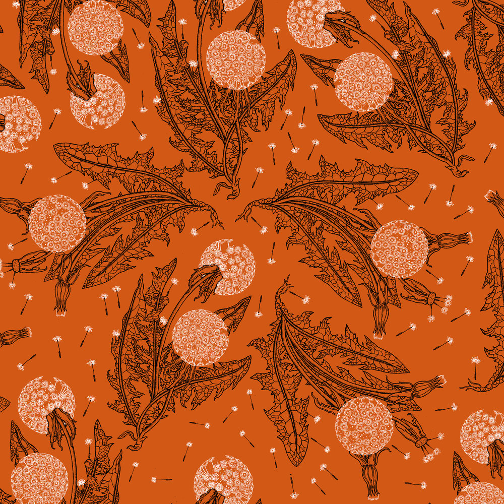 dandelions.jpg
