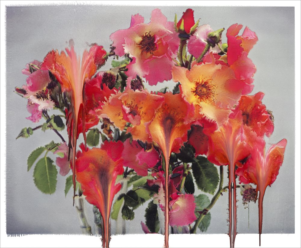 Nick Knight,  Rose IV , 2012, Archival Hand-Coated Pigment Print, 50 x 60.82 inches, Edition of 5. Image courtesy of Nick Knight.