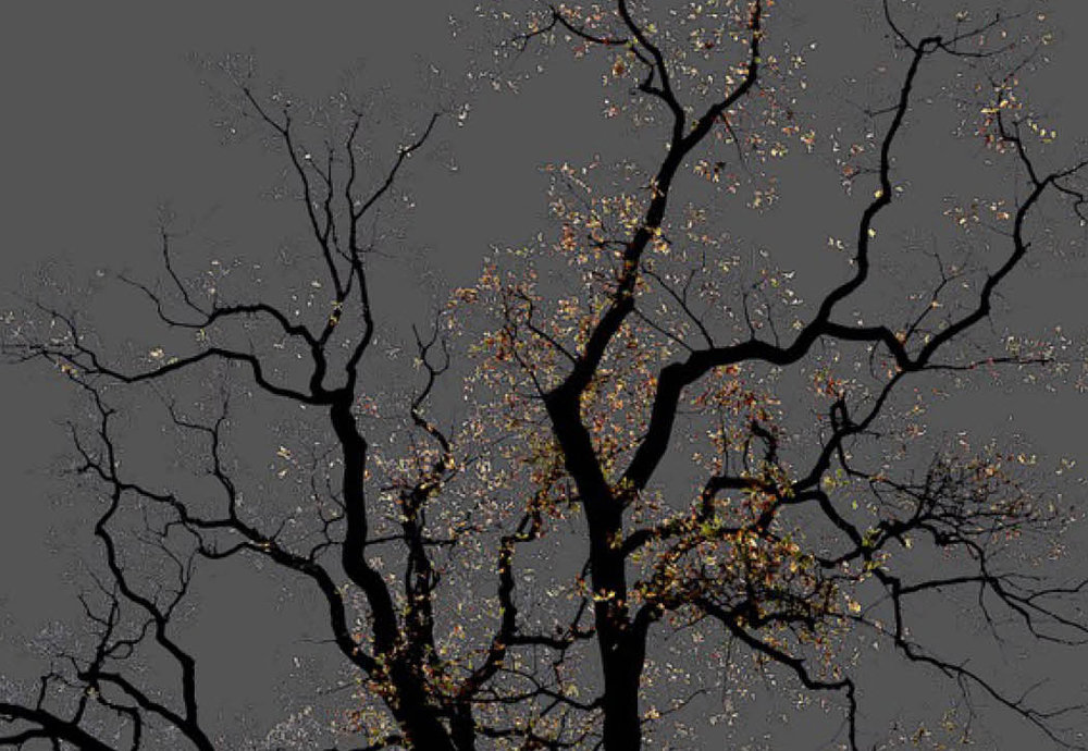 Arman,  No 15 from the series: Dark Trees , 2016 Archival pigment print 29.51 x 19.68