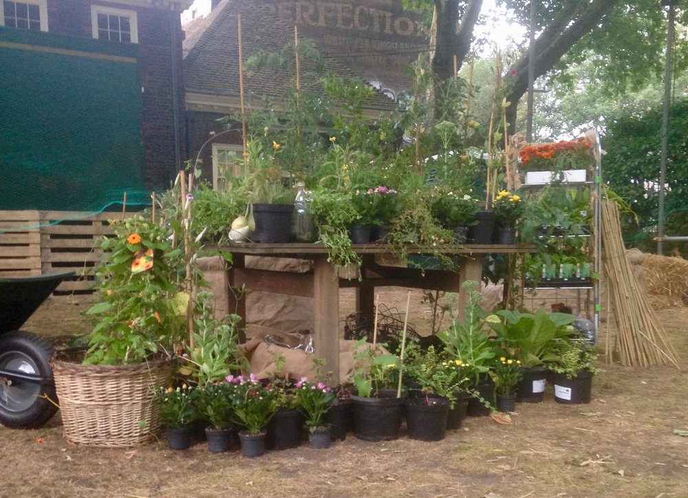 Choose plants from the crop store - We have a great variety of edibles! Don't forget the early birds...get the tomatoes.