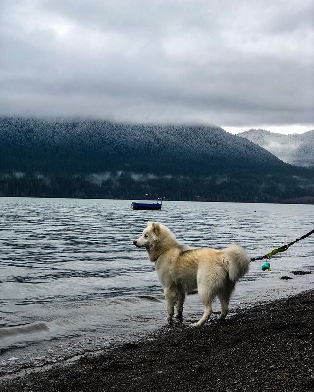 Lake Quinault located at the edge of Olympic National Park in Washington. One of them in reasons to visit is it is located in the Quinault National Rainforest. The Olympic National Park is home to largest rainforest in the United States. 🌱 **there is also dog friendly areas! 🐶 #pnwonderland