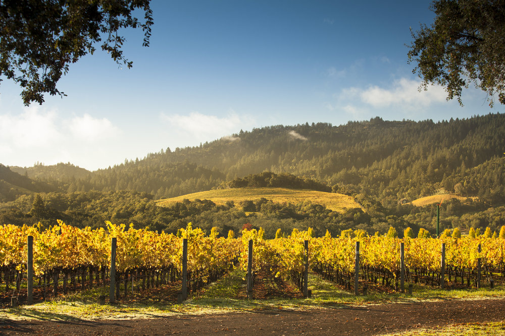 NAPA VALLEY - World renowned & utterly unmistakable