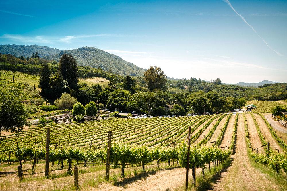 SONOMA COUNTY - The birthplace of California wine