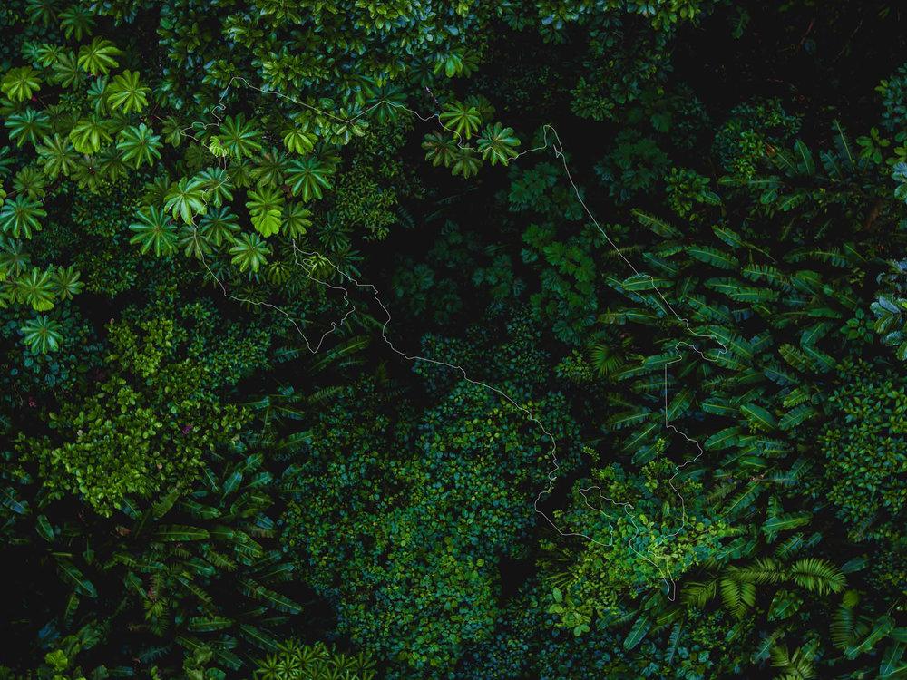 forest-visit-cr.jpg