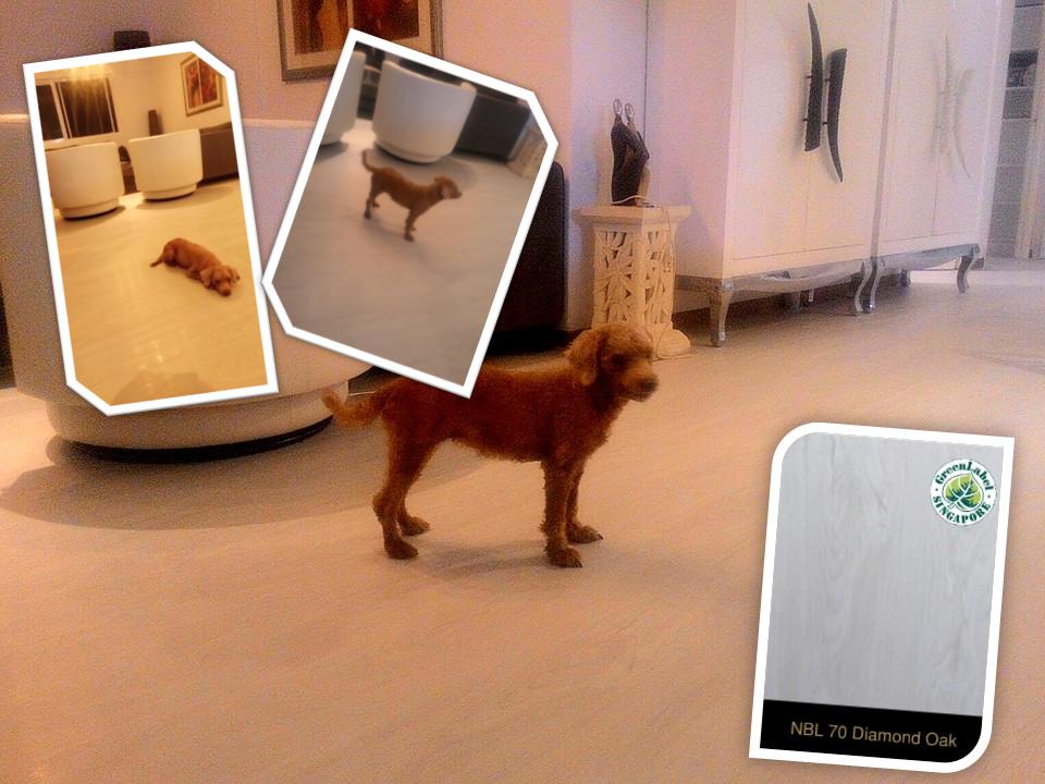 Pet Friendly Flooring Singapore.png