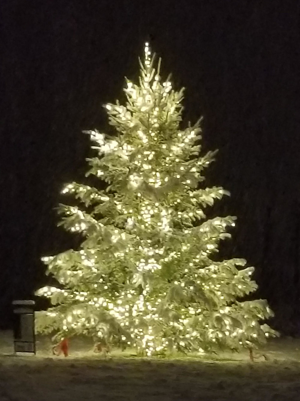 Christmas Tree at Harbor Park