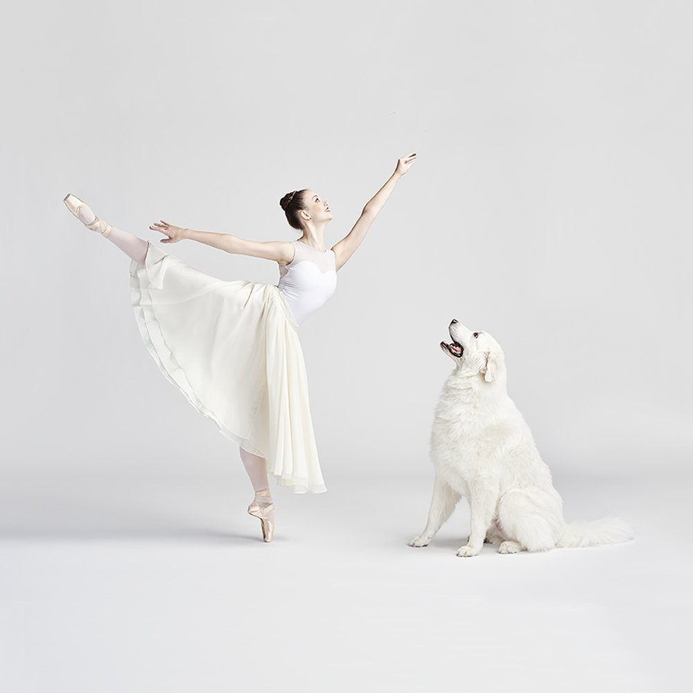 ballerina dog.jpg