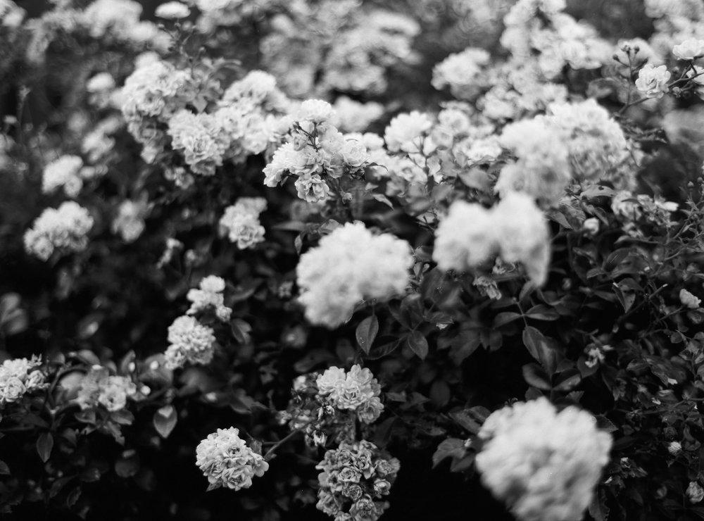 Niklas Andersson - 18_Summer_Mixed Portra400-82.jpg