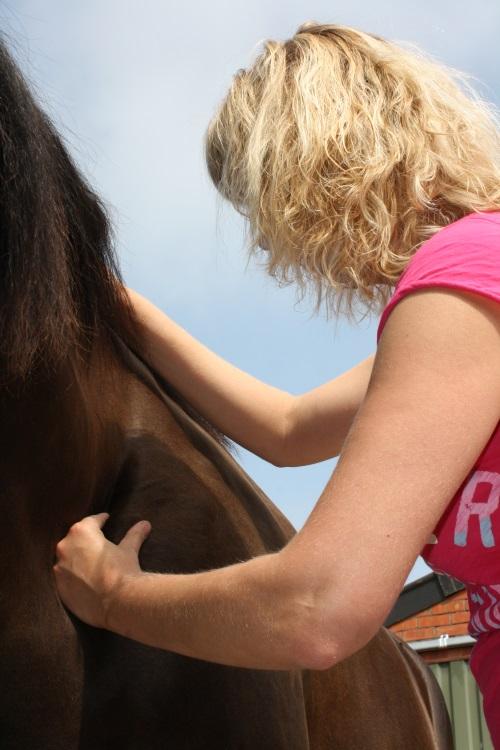 paarden massage losmaken van de schouder Paard Actief.jpg