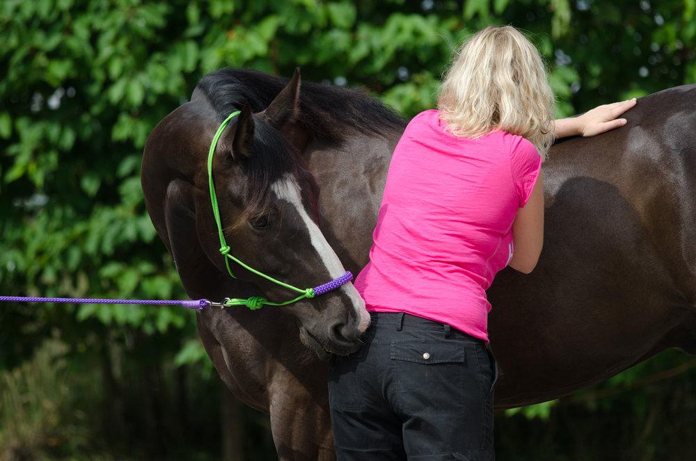Massage-paard.jpg