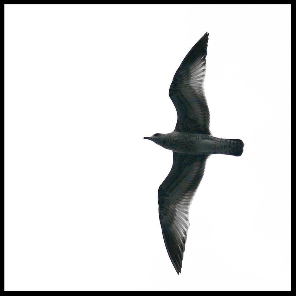 DSC01988-BIRD.jpg