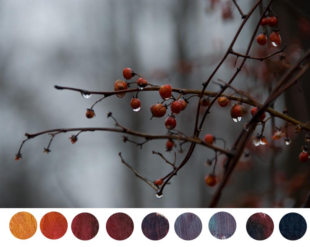 Aliz-Crimson-mixtures-bittersweet-berries