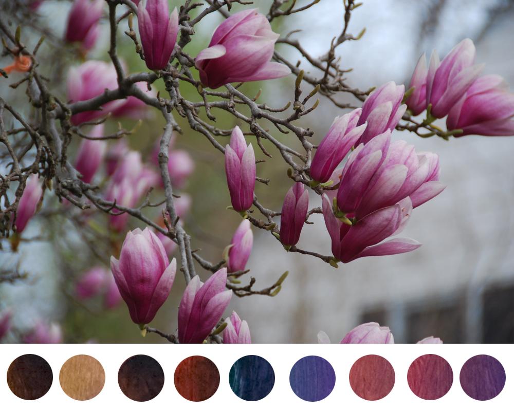 dioxazine-purple-mixtures-tulip-magnolias