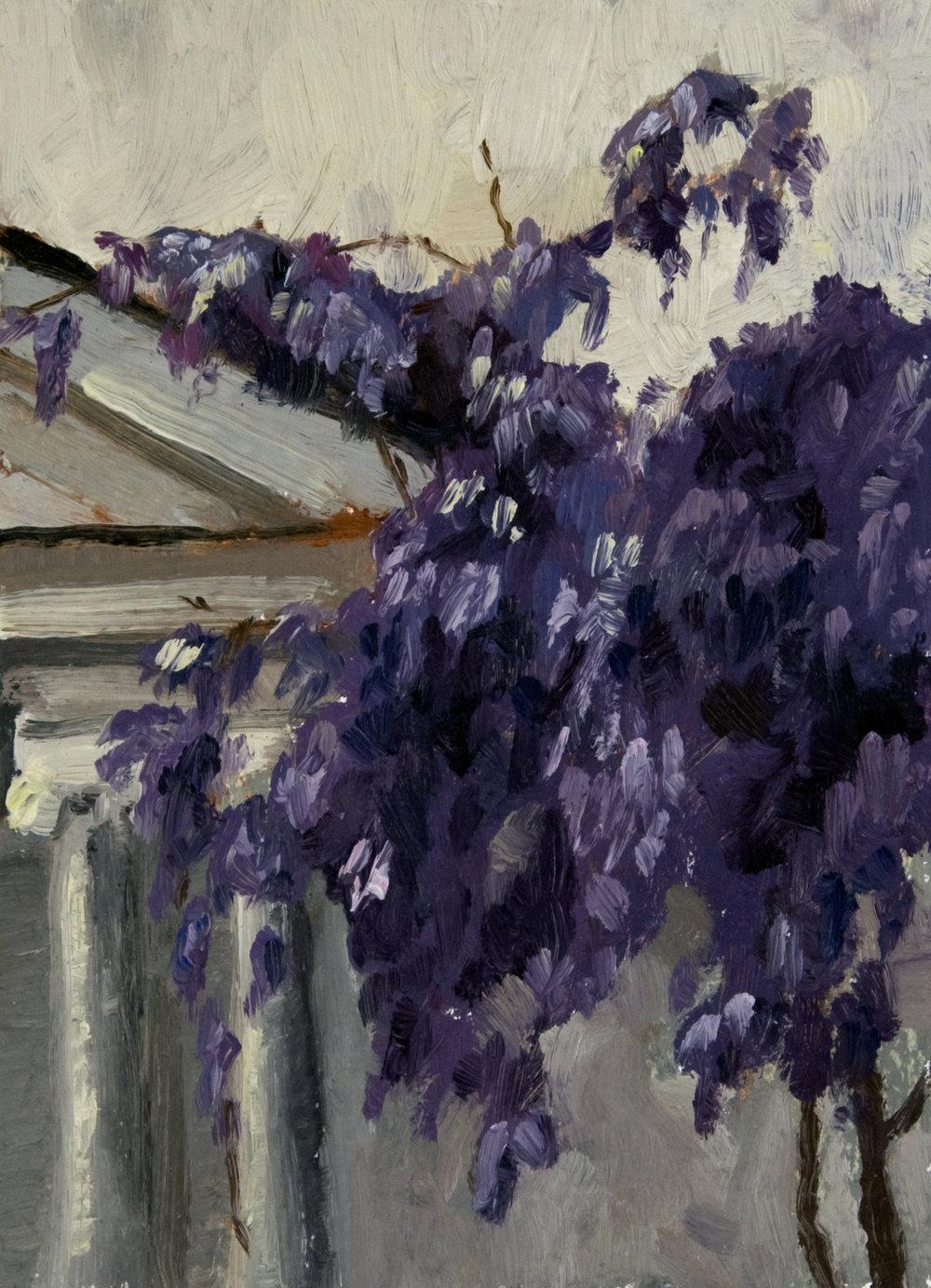 20130418-023-wisteria-7x5.jpg