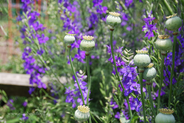 20130620 greensprings-2