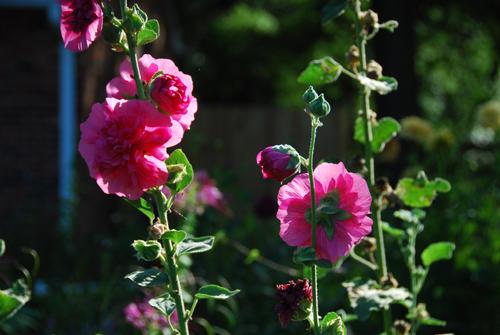 20130820 flowers-1