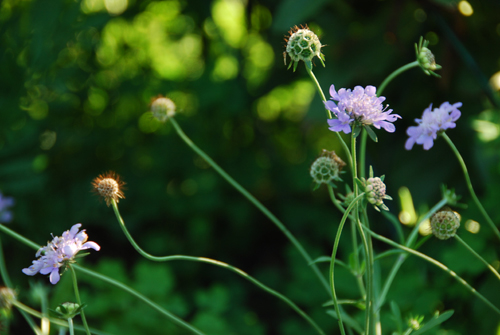 20130820 flowers-2