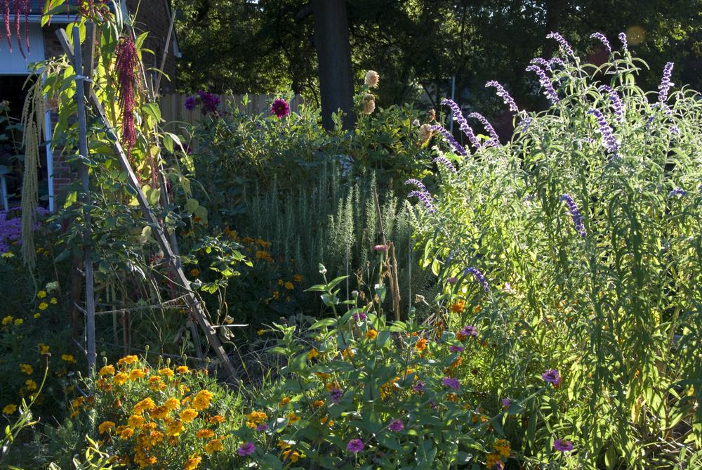 201309 wild-garden-1