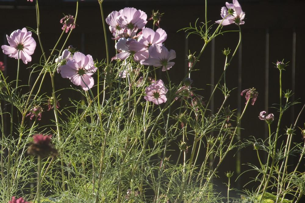 201309 wild-garden-4