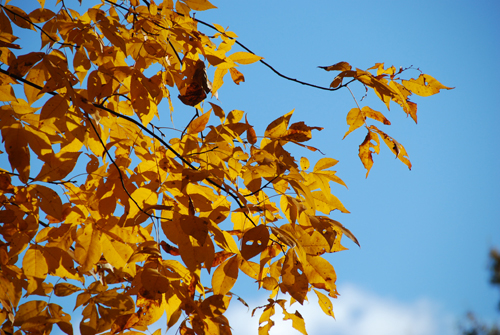 20131106 autumn-leaves-2