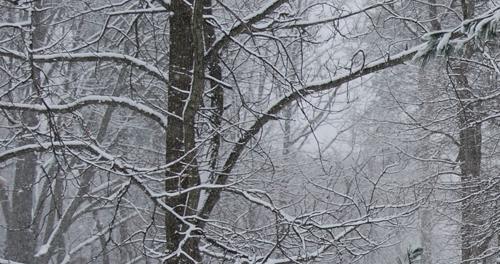 20140325 snow-day-01