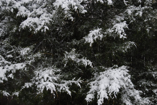 20140325 snow-day-05
