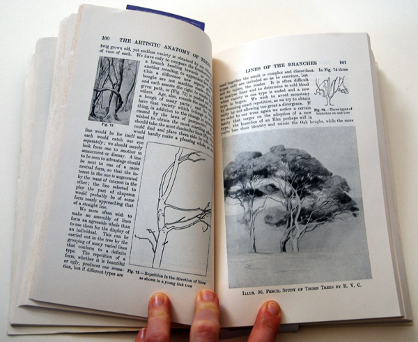 Anatomy Of Trees By Rex Vicat Cole Elizabeth Floyd