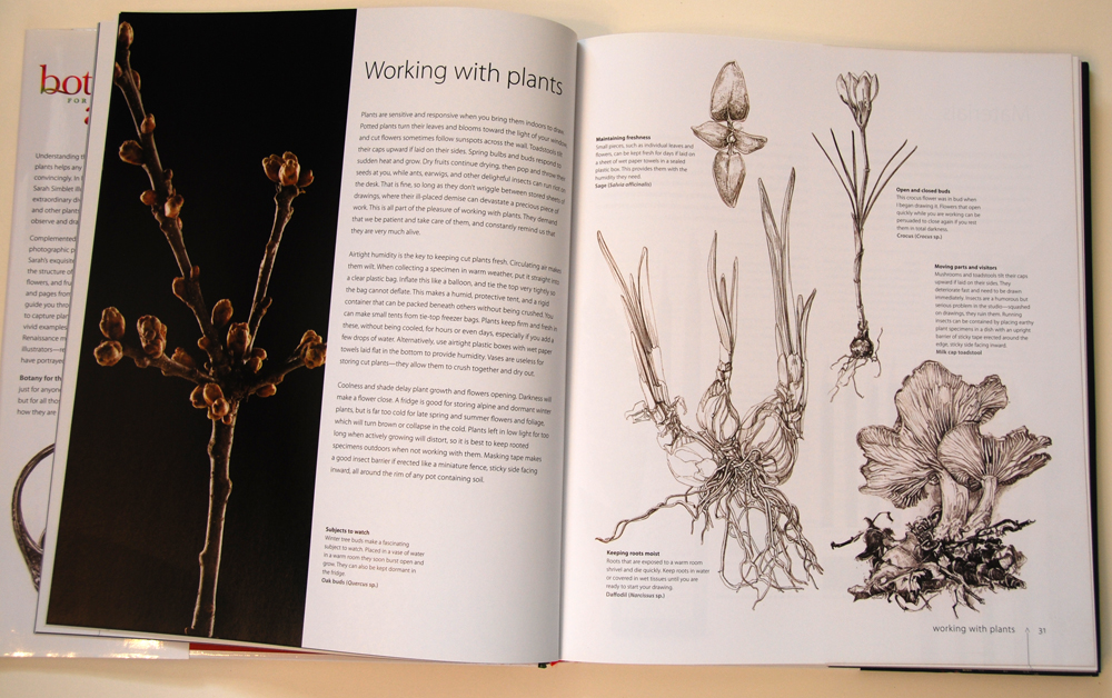 fav-art-book-botany-03