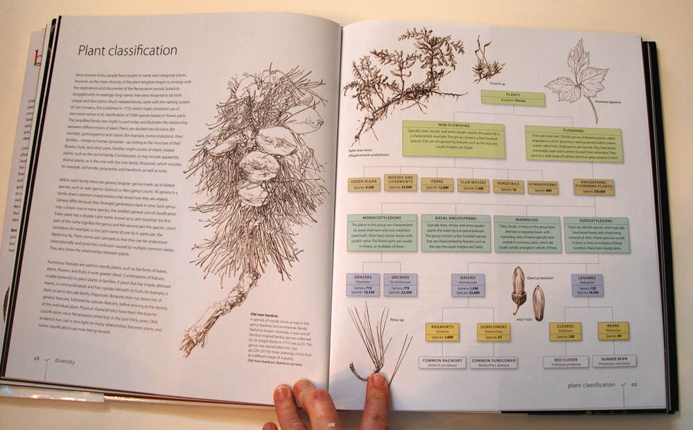fav-art-book-botany-04