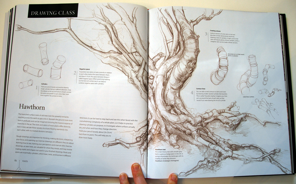 fav-art-book-botany-05