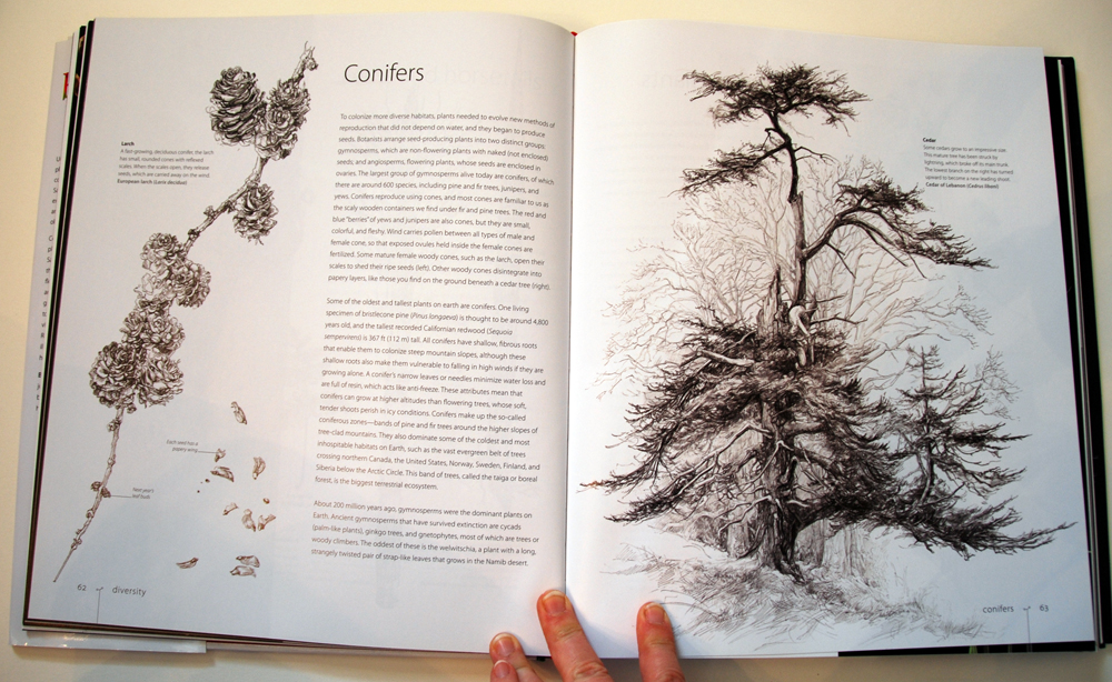 fav-art-book-botany-07