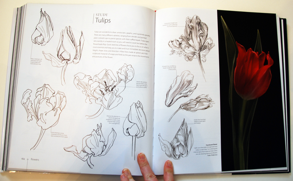 fav-art-book-botany-08