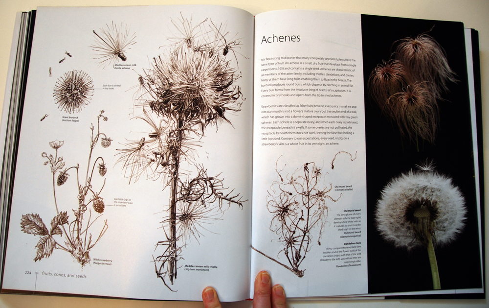 fav-art-book-botany-09
