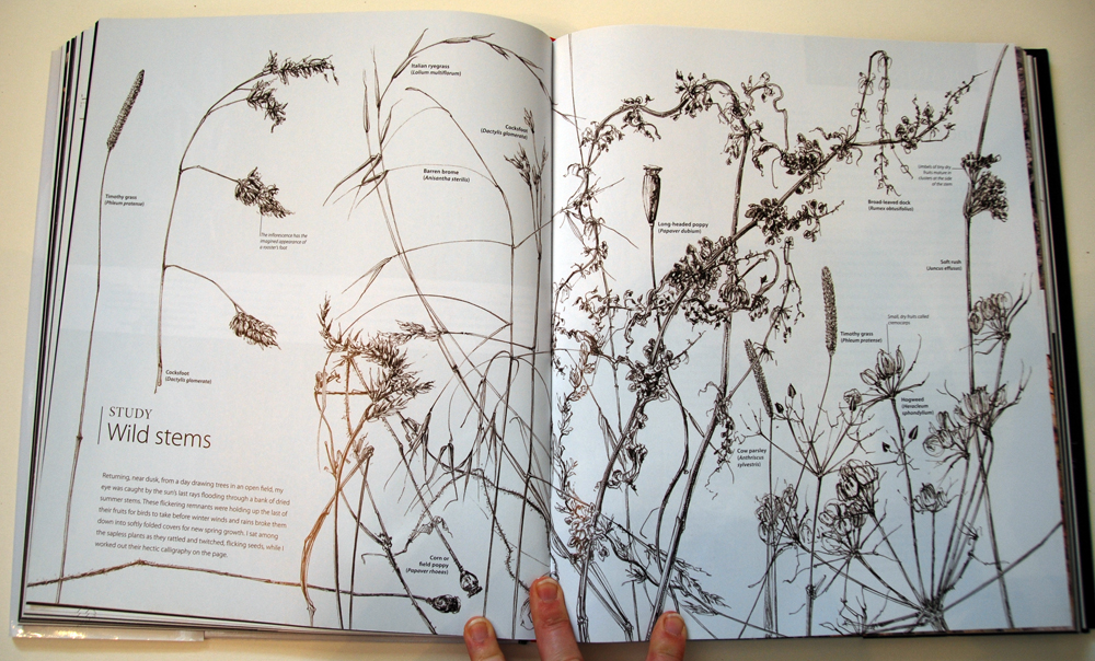 fav-art-book-botany-10