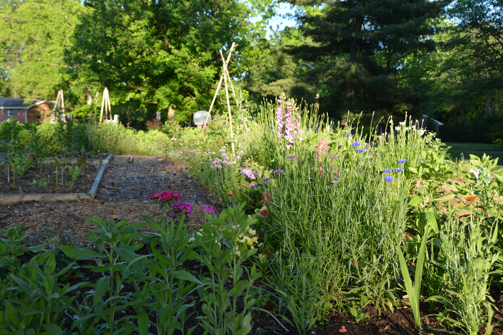 20150528-03 garden-may