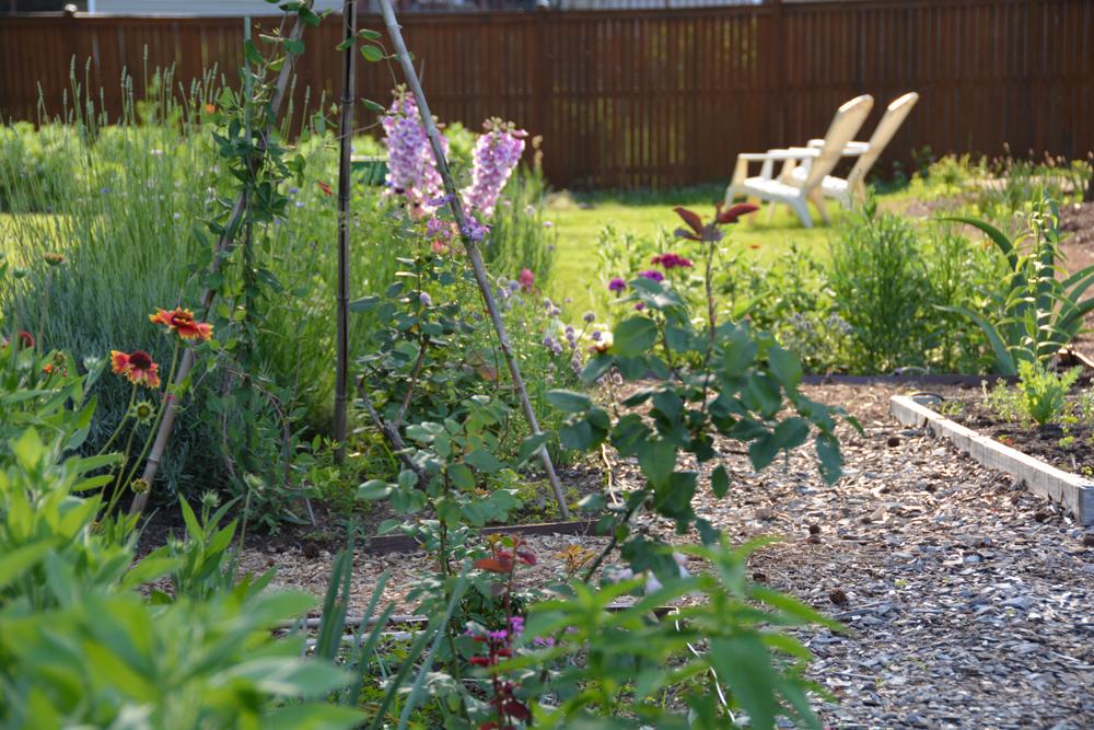 20150528-05 garden-may